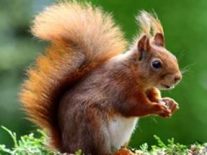 Tel un écureuil dans un arbre